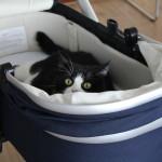 Kinderen en huisdieren: hoe pak je dat aan?
